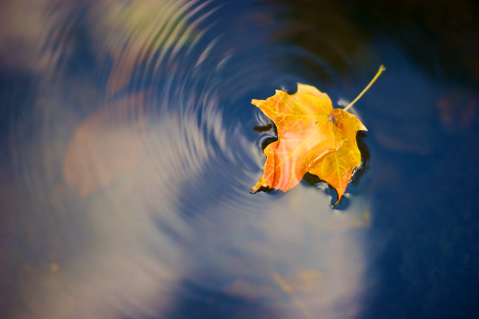 leaf rippling on the water